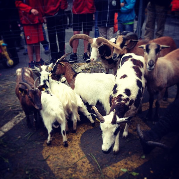 Feria agrícola Erandio #instagram