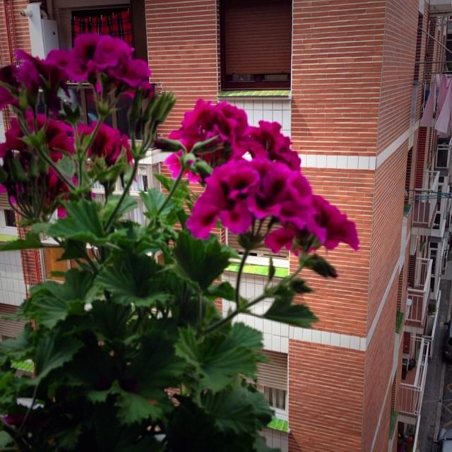 10251274_583368948447687_2136585107_n Es hora de florecer #flores #instagram