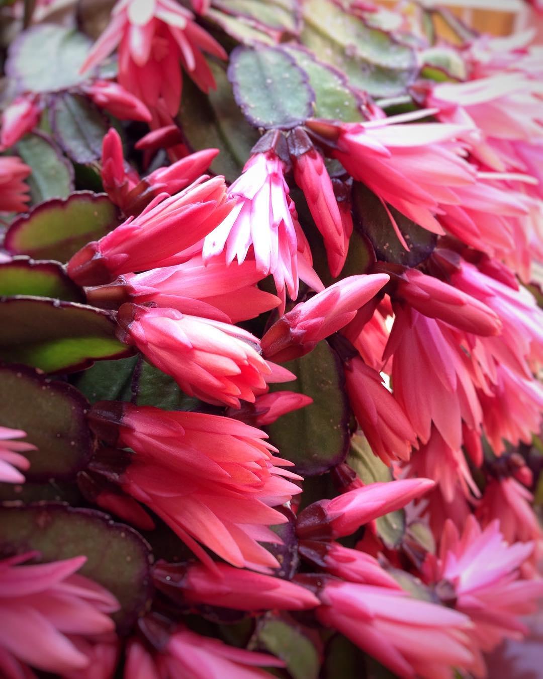 Las flores de mi balcón - Las Flores De Mi Balcón